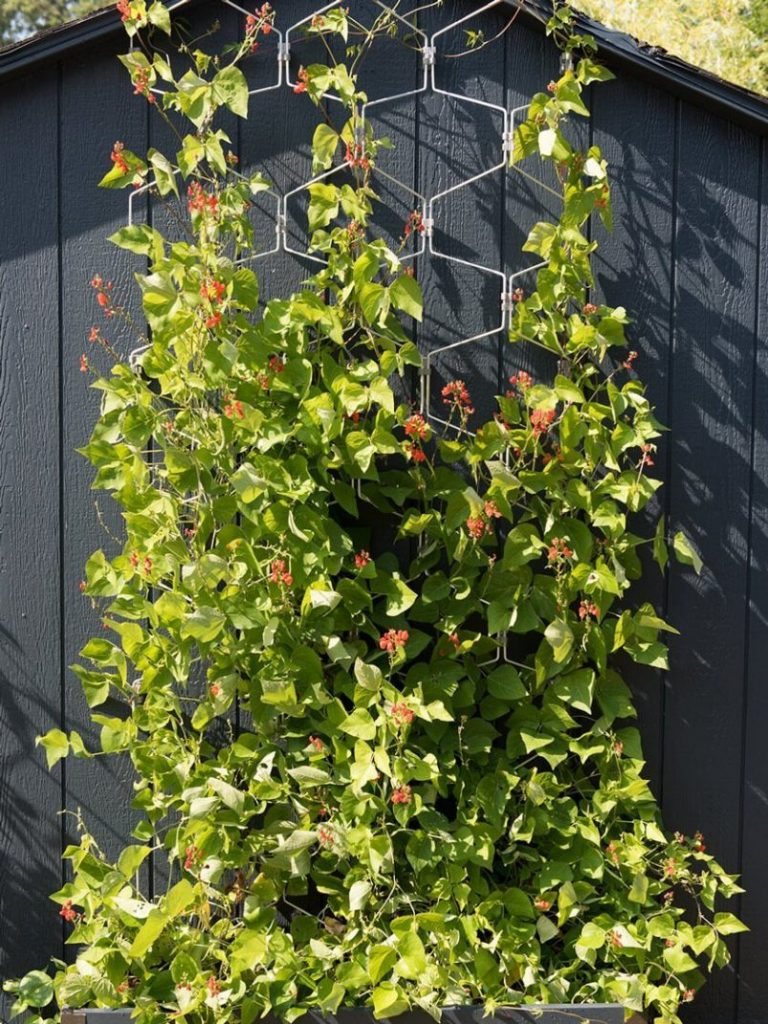 DIY Trellis Ideas to Make Your Garden More Beautiful