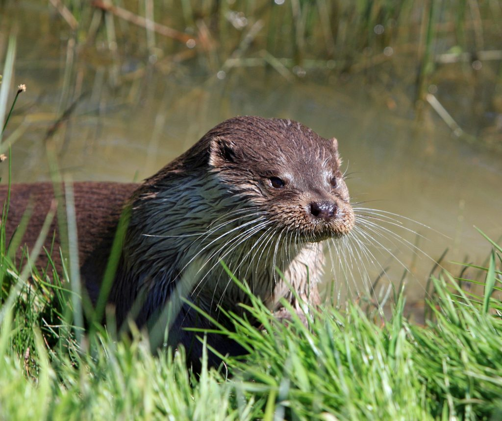 he Otter-Facts That Prove They're The World's Best Animal