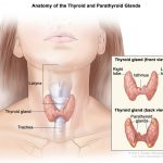 Thyroid Disorder prevention-Howto alleviateand stop