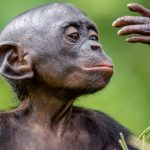 monkeys and humans similar?