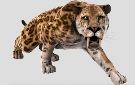 Sabre-toothed Tiger: The once dominant apex predator