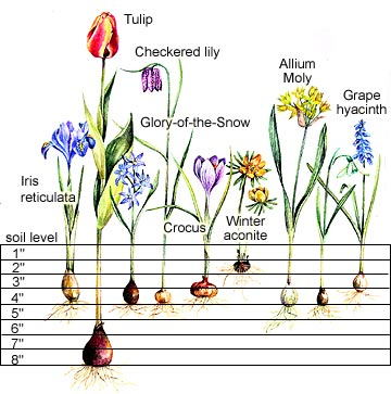 Plant Flower Bulbs For Beautiful Container Gardening