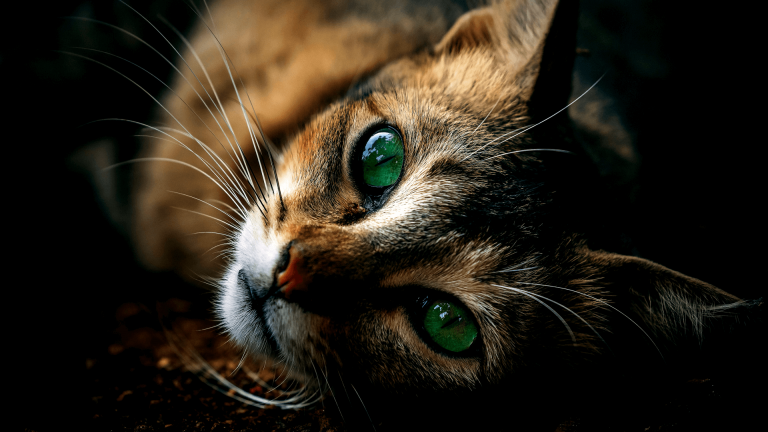 Having Pet can give you more healthy life