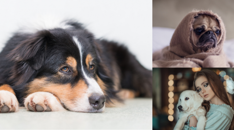 Prevention and Detection of Dog Ear Infections