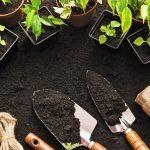 The History of Organic Vegetable Gardening