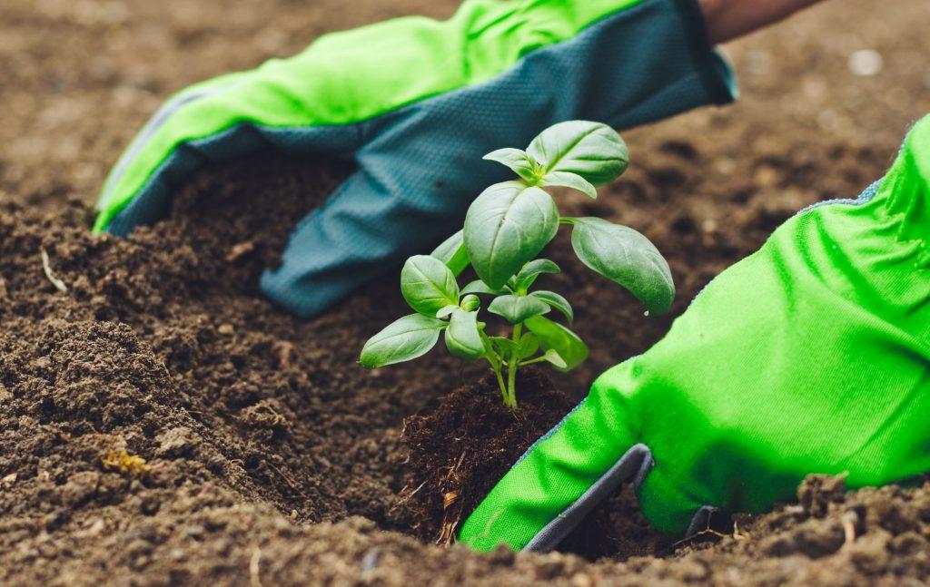 Organic Vegetable Gardening