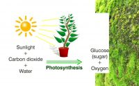 Photosynthetic Nutrition For Health and Life
